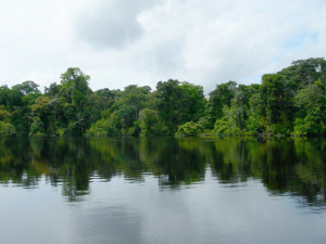 survival water source